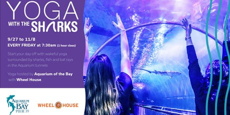 Early Morning Yoga with Sharks! tickets