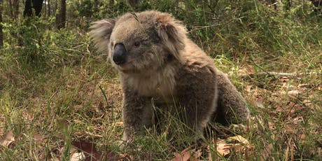 Southern Highlands Koala Habitat conservation tender - Info Sessions tickets