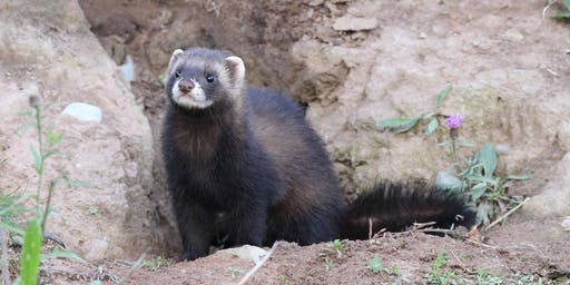 Mustelid survey and identification workshop