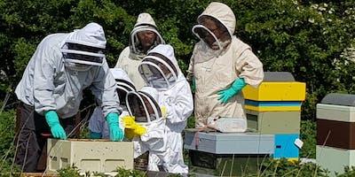 Feel the Buzz of Beekeeping 08/05