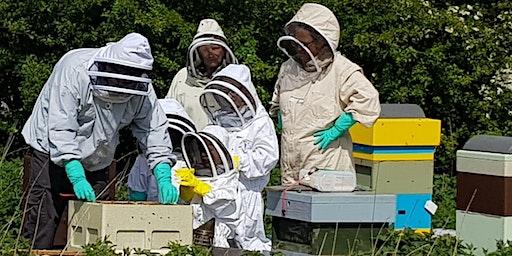 Feel the Buzz of Beekeeping 10/05