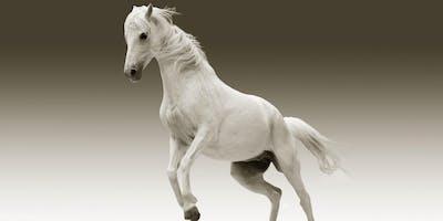 """""""Pferderecht"""" verstehen: Rund um das Thema Pferdeverträge und Recht"""