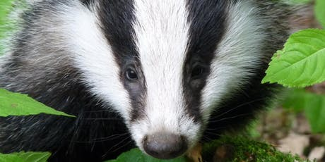 Scottish Badgers Level 1 Badger Surveyor Course - Moray tickets