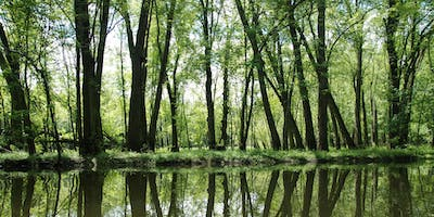 Paddle the Flooded Forests