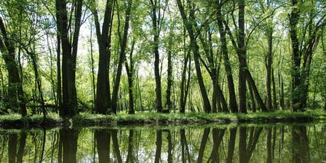 Paddle the Flooded Forests billets