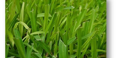 Maintaining your Florida lawn