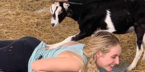 WW Wellington: Goat Yoga (with Downward Goat & Alison Berkery)