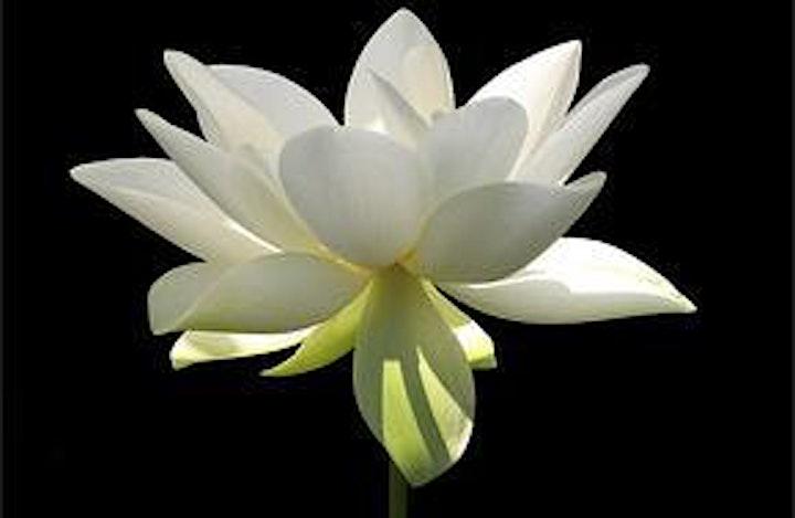 Chakras, Healing and Relationships image