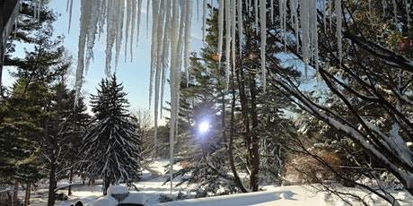 Snowshoe Tours in the Sculpture Park - February 22, 2020 (10:30 am or 1 pm) tickets