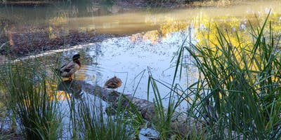 Wetland Restoration: an ELC Case Study