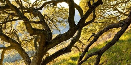 Trees of Point Reyes: a Weekend Intensive Retreat tickets