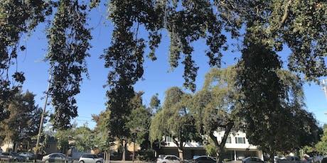 Urban Tree Walk in North Central San Mateo tickets