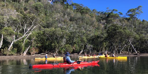 Bushcare Kayak - Lane Cove River