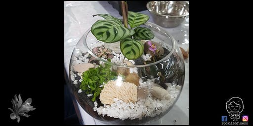 Terrarium Workshop with Rock Leaf Moss @ Island Collective