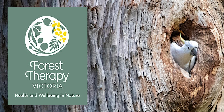 Forest Therapy Experience: Eagles Nest Picnic Ground, Olinda image