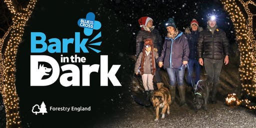 Bark in the Dark - Haldon Forest