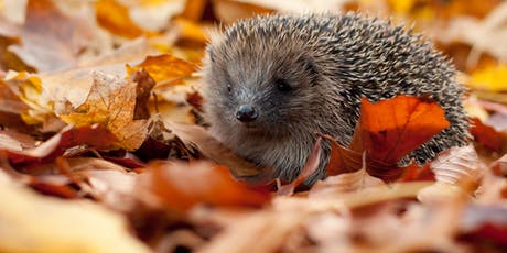 WILDLIFE WATCH - PRICKLES AND PAWS tickets