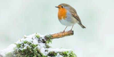 WILDLIFE WATCH - CHRISTMAS FOREST SCHOOL: CRAFTS & GAMES
