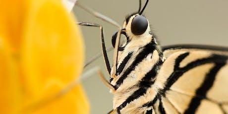 Wild Arena | Macro moth photography tickets