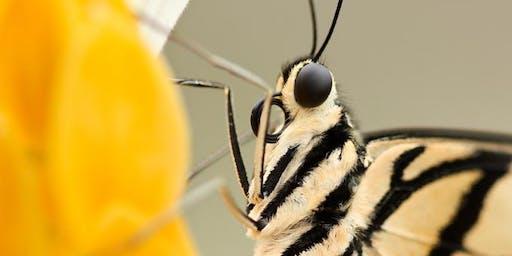 Wild Arena | Macro moth photography