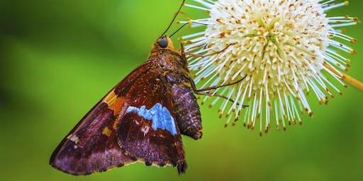 Wild Arena   Macro moth photography