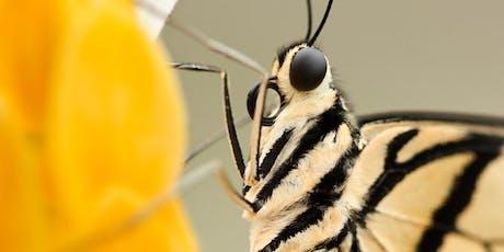 Wild Arena   Macro moth photography tickets