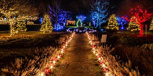 Winterlights at The Bradley Estate
