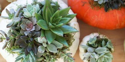 Pumpkin Succulent Plant Party at Indigo Reef Brewing Co