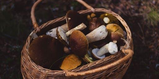 Mushroom Identification Walk