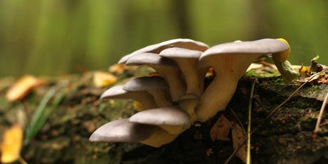 Grow Your Own Oyster Mushrooms tickets