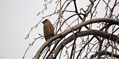 *CANCELED* Winter Bird Walk