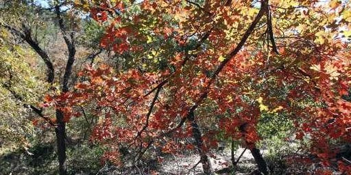 Fall Plant Walk