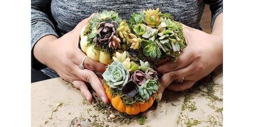 Pumpkin Succulent Arrangement (2019-10-20 starts at 3:00 PM)
