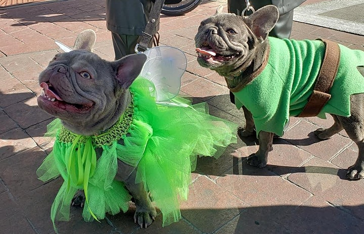 PETS AND PUMPKINS FESTIVAL - 2019 image