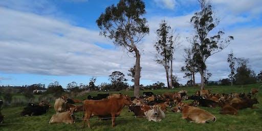 Regenerative Grazing for Soil Health and Profit