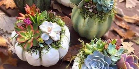 Succulent Pumpkins tickets