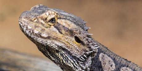 The Art Of Wildlife Photography – WILD LIFE Sydney Zoo tickets