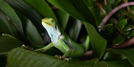 The Art Of Wildlife Photography – Melbourne Zoo tickets