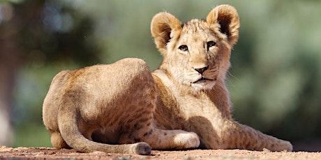 Wildlife At Werribee – Safari Photography tickets