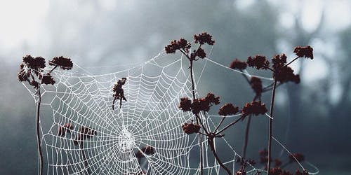 """Web Weaving Magick Class  - """"Oh What A Tangled Web We Weaved"""""""