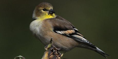 Visit to RPBO's MAPS banding station tickets
