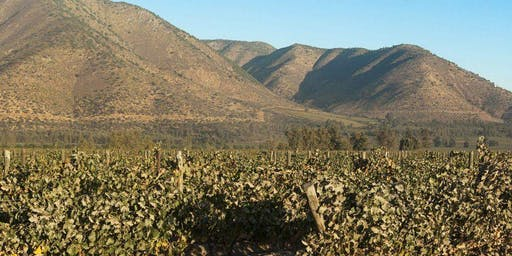 Chilean earth and elegance with Vendaval wines