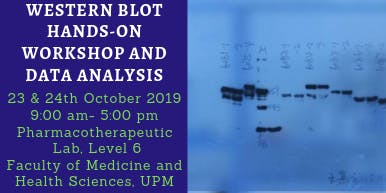 WESTERN BLOT HANDS-ON WORKSHOP AND DATA ANALYSIS