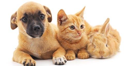 Let's Talk About - Hills Pet Buddies