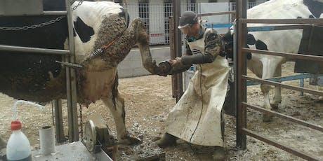 Segnali dalla vacca Expert con elementi di patologie podali - Parma 16/01/2020 biglietti