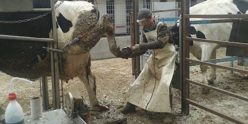 Segnali dalla vacca - Expert con elementi di patologie podali - Parma 16/01/2020