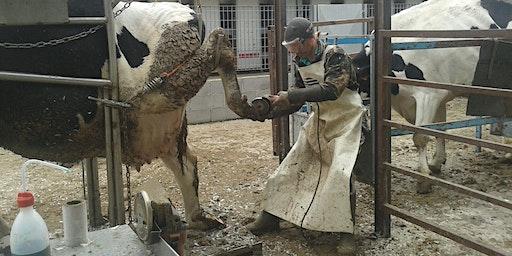 Segnali dalla vacca Expert con elementi di patologie podali - Parma 16/01/2020