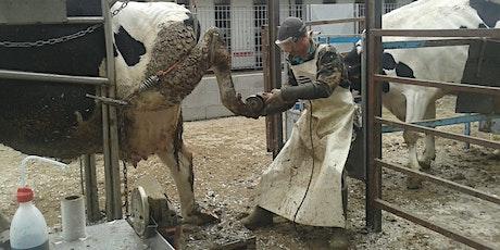 Segnali dalla vacca Expert con elementi di patologie podali - Parma 17/09/2020 biglietti