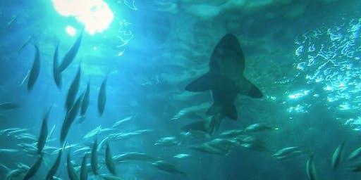Family day at The Deep (aquarium), Hull