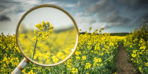 Beyond the Looking Glass: Impacting Community Health Through A Trauma Informed Lens